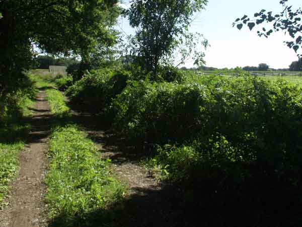 pad langs Minicamping Twekkelo